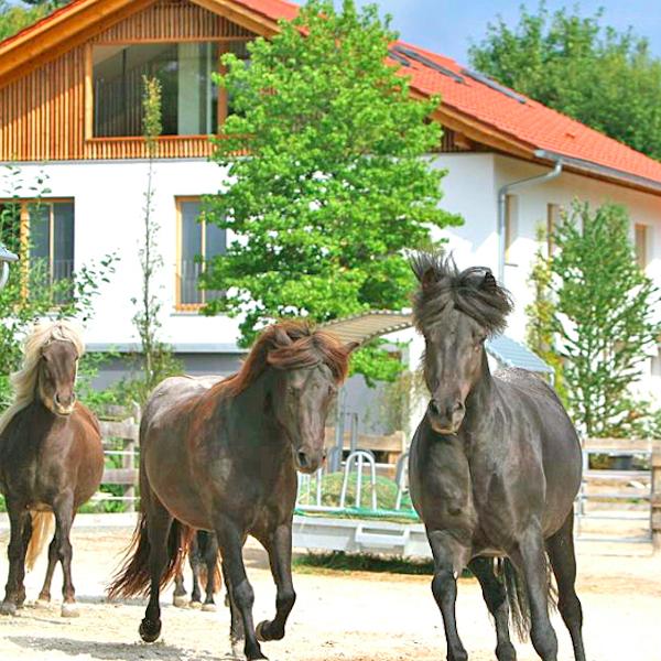 Pferdehof Gut Wangerltal bei München